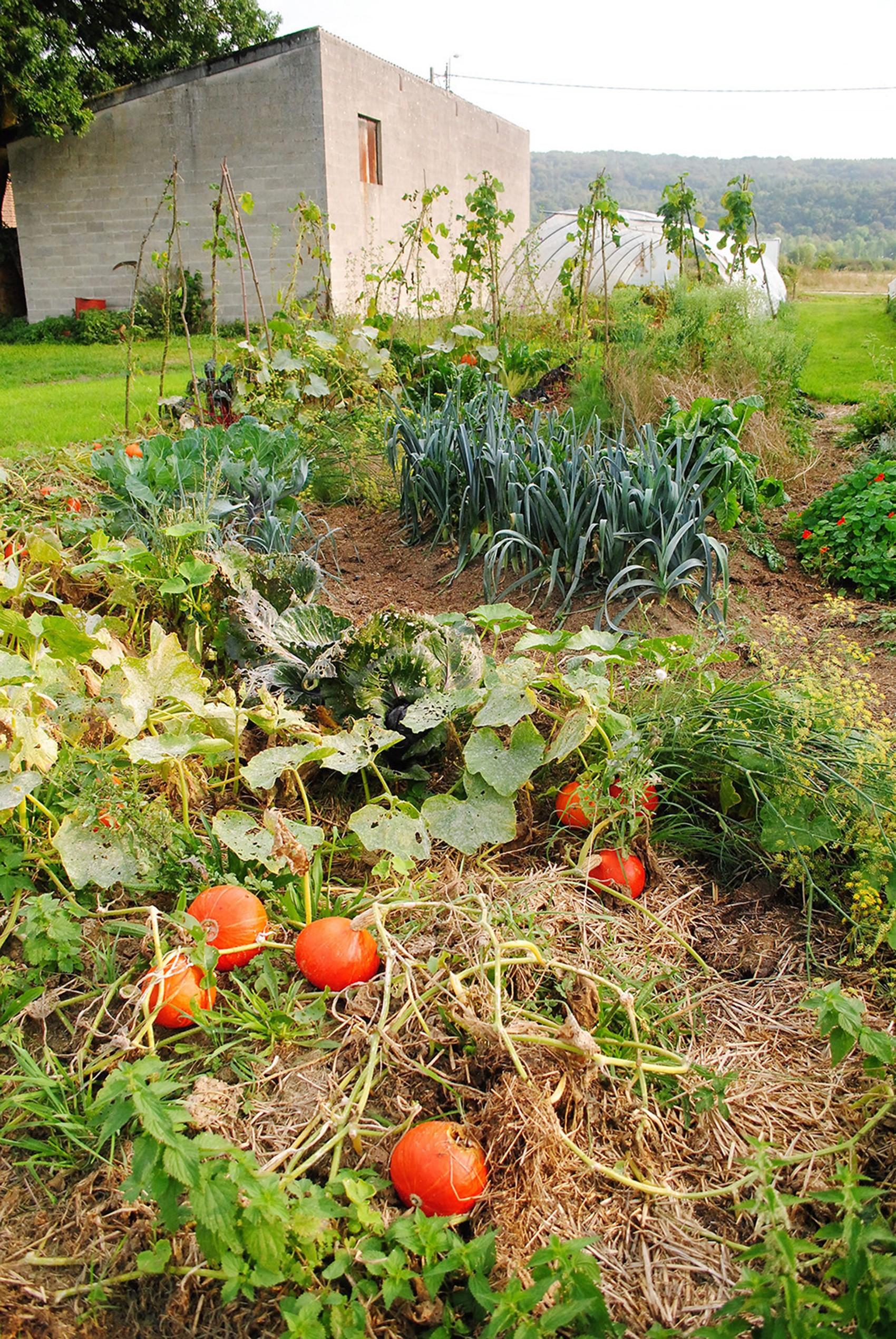 Au jardin 1 1 catherine kalpers for Jardin 1m2